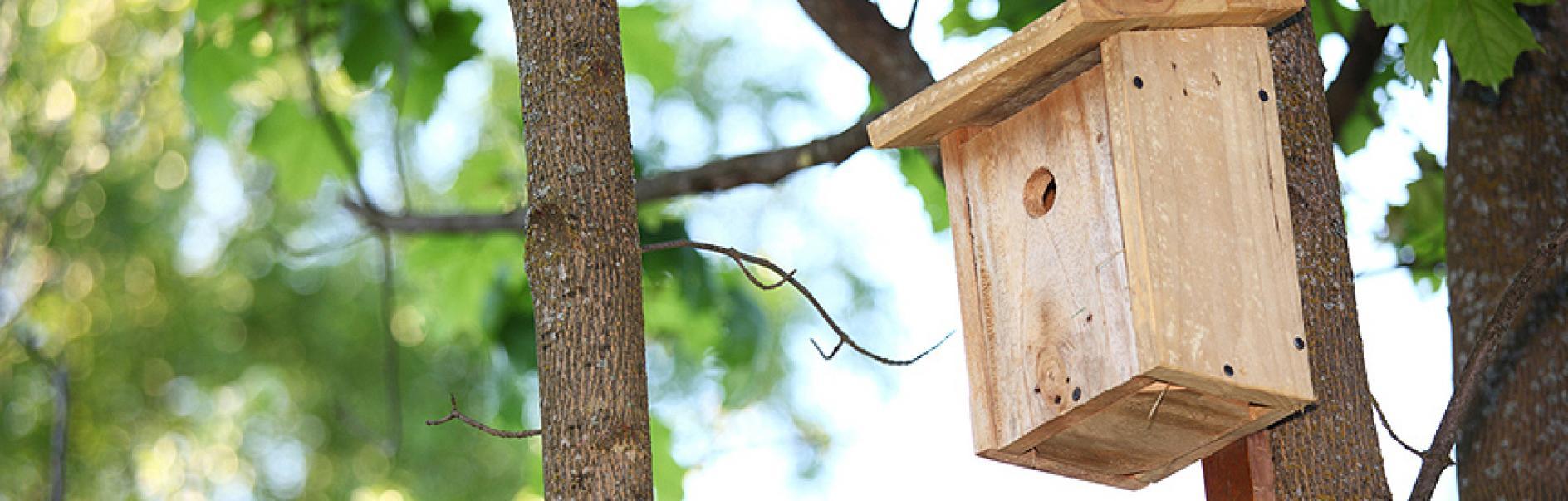 Bygg din egen f gelholk av tr - Casette per uccellini da costruire ...